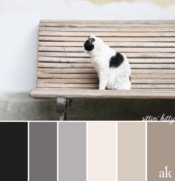 a cat-inspired color palette // soft black, gray, tan