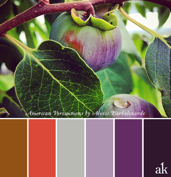 a persimmon-inspired color palette // bronze, persimmon, gray, violet, purple // photo by Alexis Barbalinardo