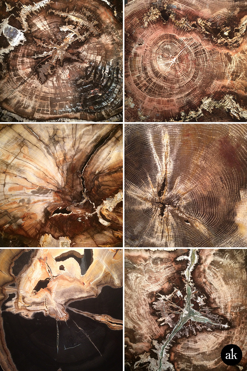 Free Hi-Res Images of Petrified Wood | Akula Kreative