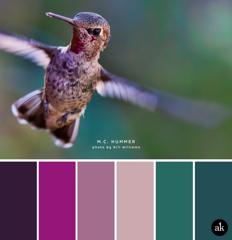 a hummingbird-inspired color palette // dark purple (aubergine), magenta, violet, pale pink, turquoise, marine blue