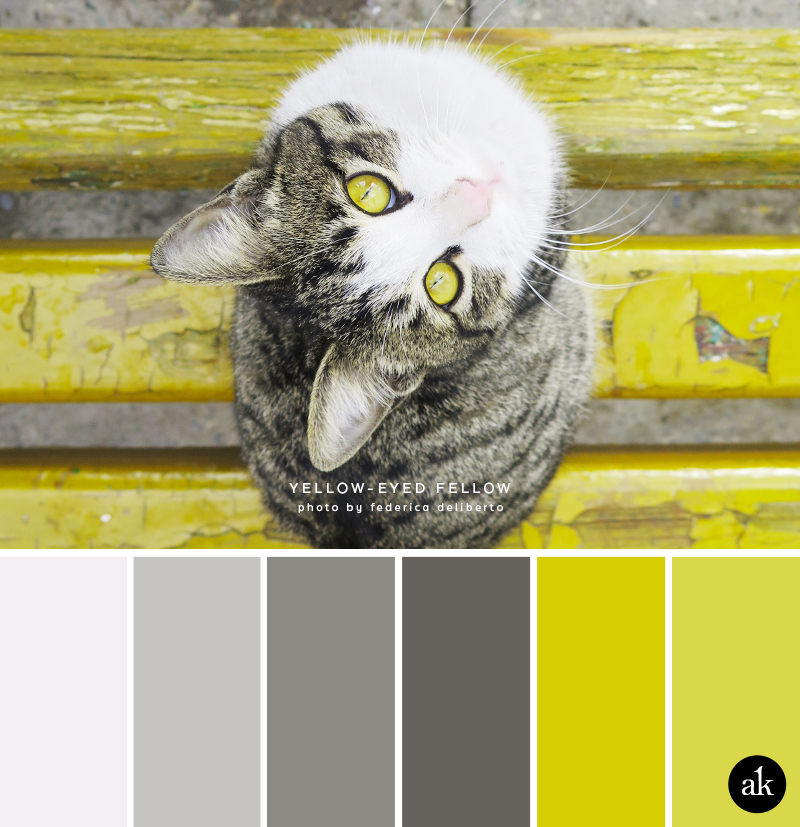 a cat-inspired color palette // gray, chartreuse