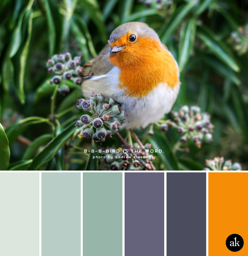 a robin-inspired color palette // light mint, seaglass green, purple, gray, orange