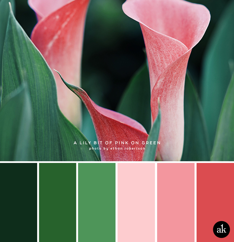 a calla-lily-inspired color palette // pinks and greens