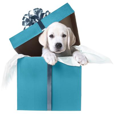 taskray-amazon-giveaway-puppy-01.jpg