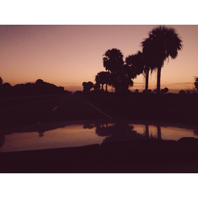 Palm silhouettes on a dawn drive. #dawn #florida #silhouette #cruisin