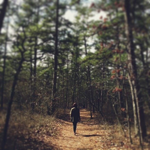 A walk in the woods. #newjersey #batsto #latergram #woods #natureisaplace