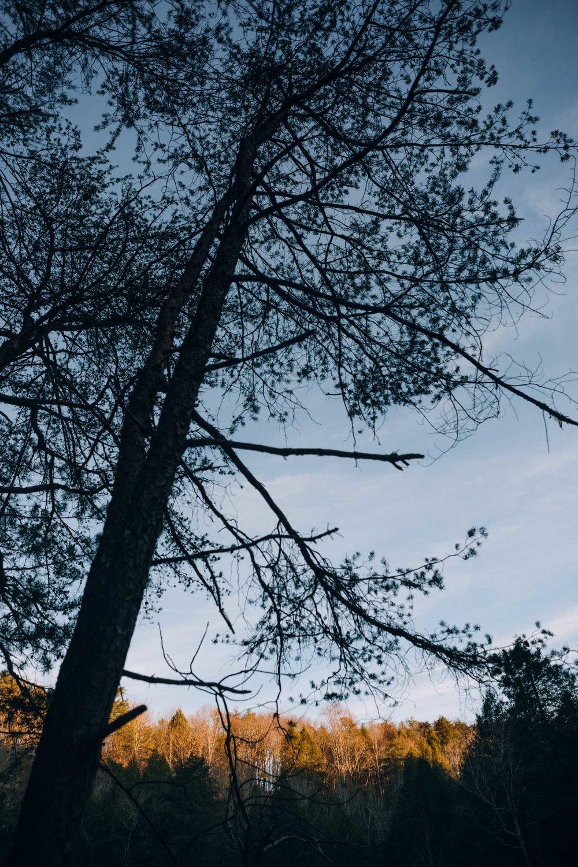 Climbing (29 of 75).jpg