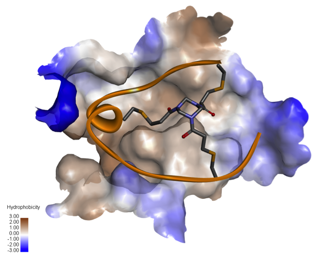 Helix forming Bicycle with its peptide backbone shown as a ribbon and its core scaffold shown as sticks, bound to the ligand binding domain of a receptor tyrosine kinase, shown as a surface hydrophobicity plot.