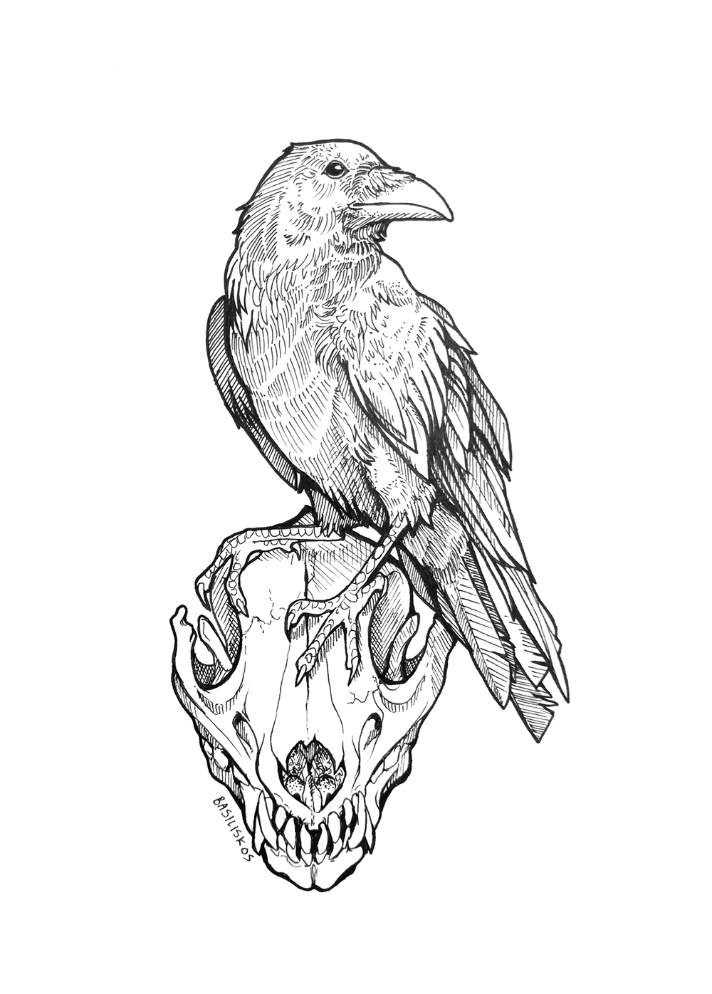 @CT_Bergstrom,Corvus corax