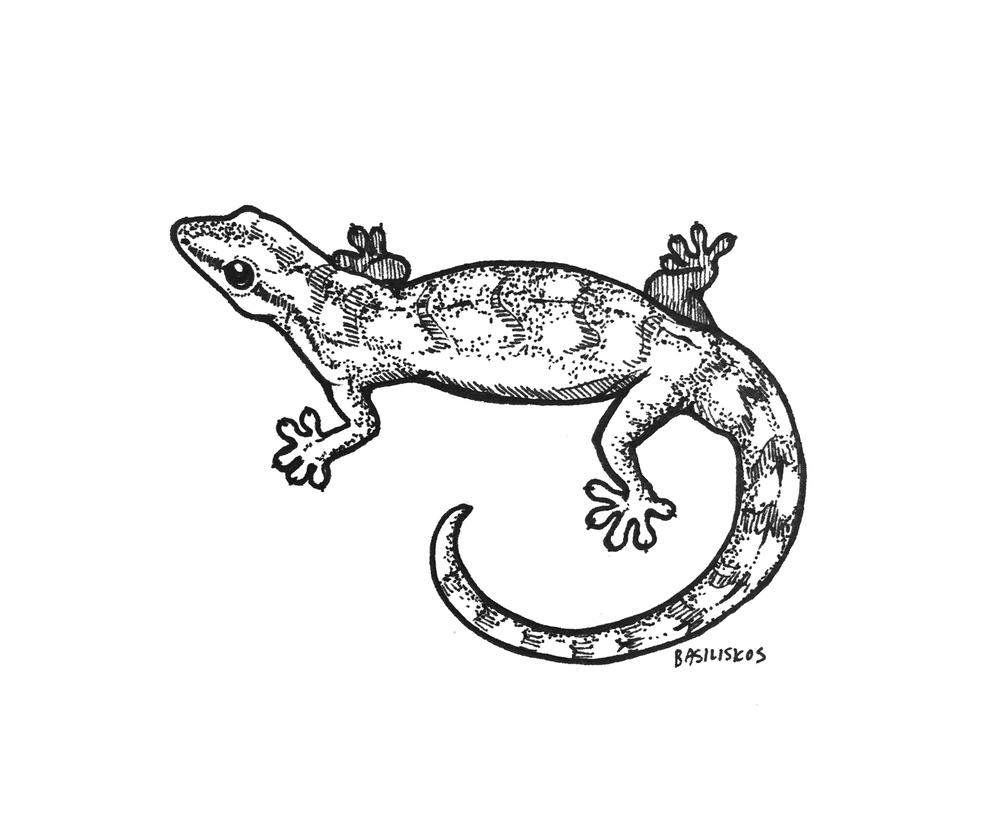 @Tony_Gamble1, Lepidodactylus lugubris