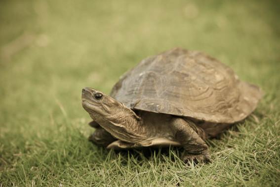 a beginner s guide to keeping turtles australian wildlife