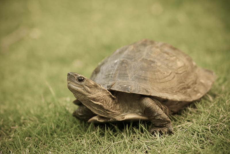 A Beginner S Guide To Keeping Turtles Australian Wildlife Brisbane Workplace Reptile Safety Training