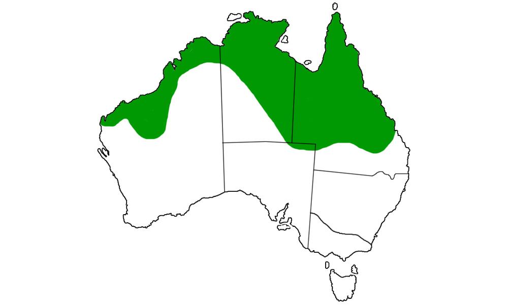Aspidites-melanocephalus-range.jpg