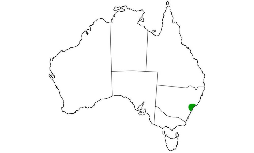 Hoplocephalus-bungaroides-range.jpg