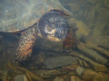 Australian Turtles Australian Wildlife Brisbane Australian Wildlife Brisbane Workplace Reptile Safety Training