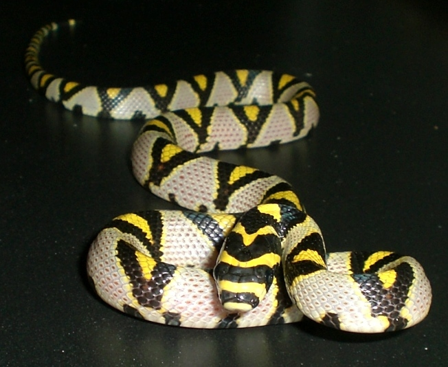 We Are Interested In Their Behavior And All Aspects Of Lives For This Reason I Like Enclosures With A Large Viewing Area The Snake S Perspective