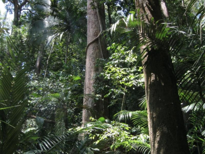 Comment493_Malaysia_rainforest.jpg