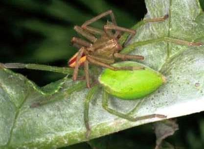 spider-19.jpg