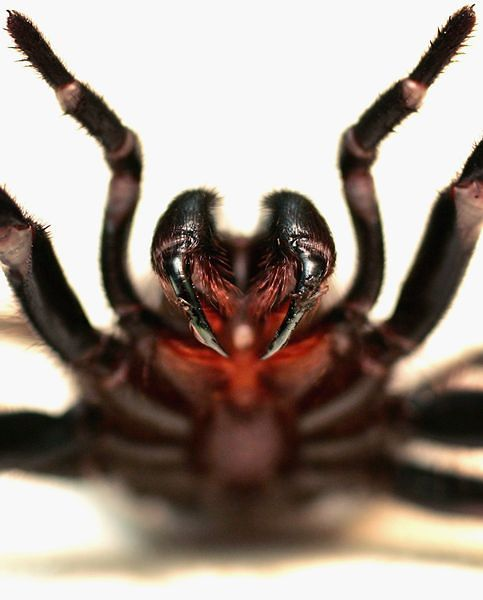 spiderbite.jpg