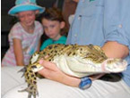 Cool Companions Wildlife Shows