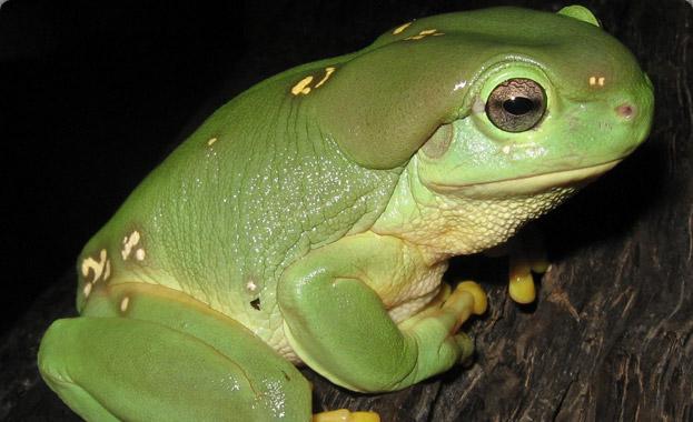 tree-frog - 1/22