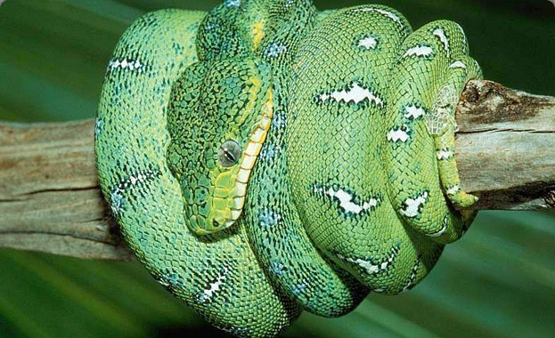 3-reptilekeeping.jpg
