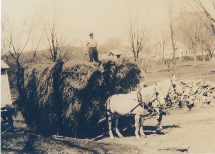 Farming-8.jpg