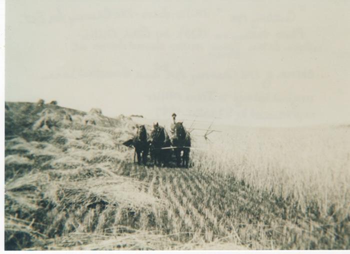 Farming-10.jpg