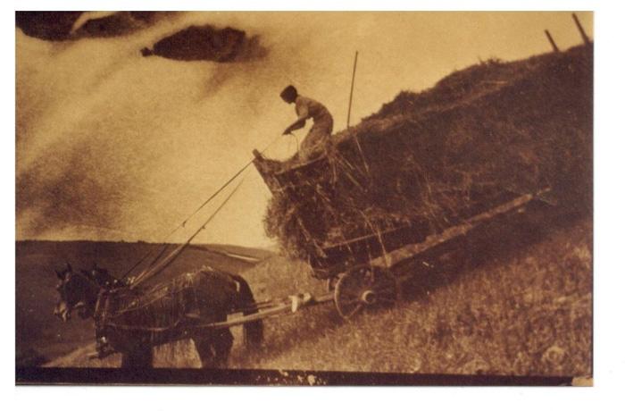 Farming-14.jpg