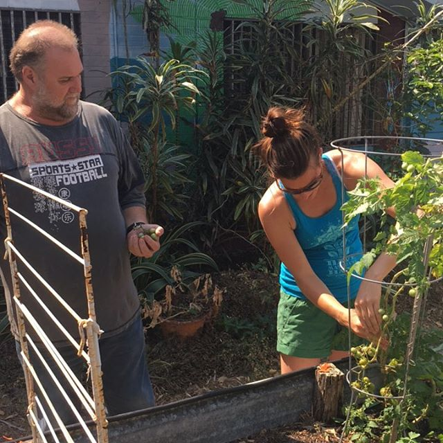 Working hard in the #genxchange garden today! #tomatoes #itshot #sohot #helpmeimmelting #melt #MNC #plotshaming #sunshinecoast