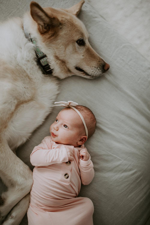 7 dog newborn duos guaranteed to make you smile