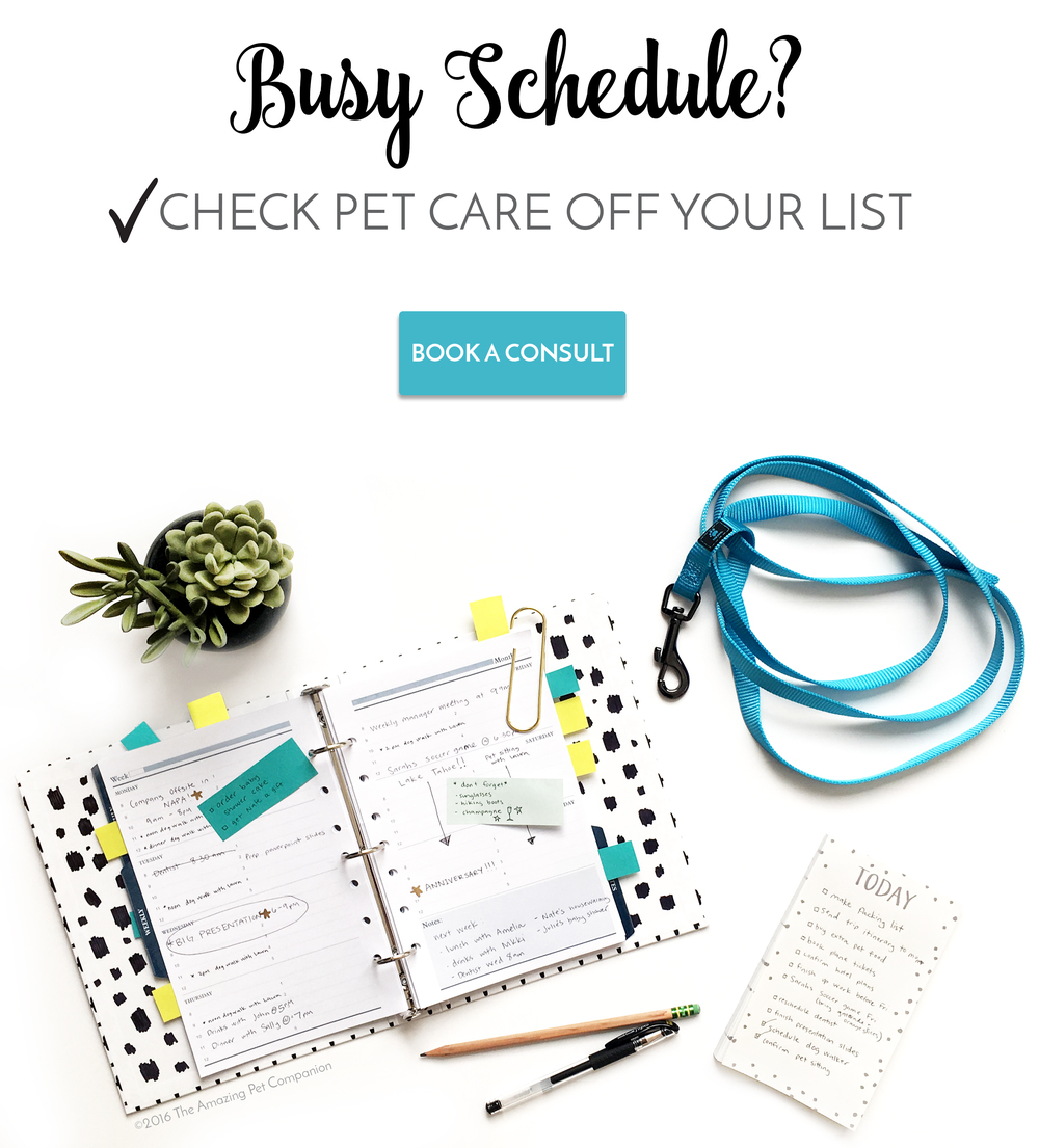 Schedule pet sitting with The Amazing Pet Companion