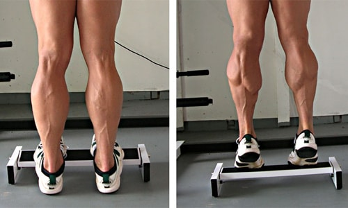 calves-training