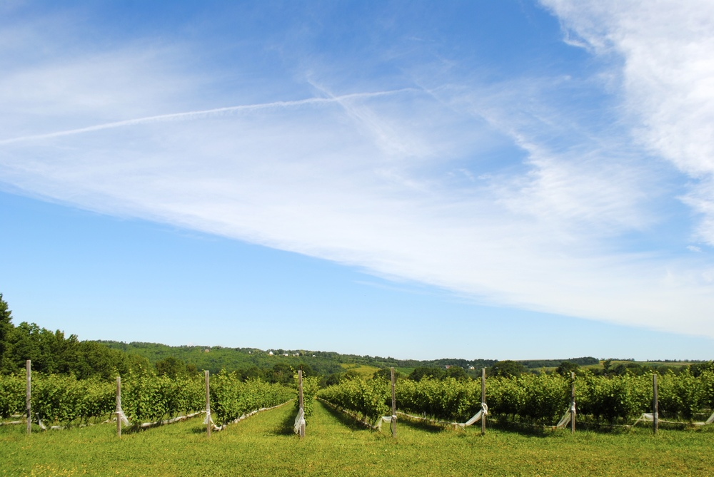 L'Acadie, the all natural and organic vineyard - their bubblies were delicious!