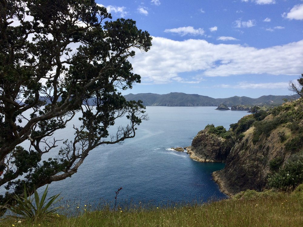 Short hike to the lookout point on Paradise Island, Bay of Islands.
