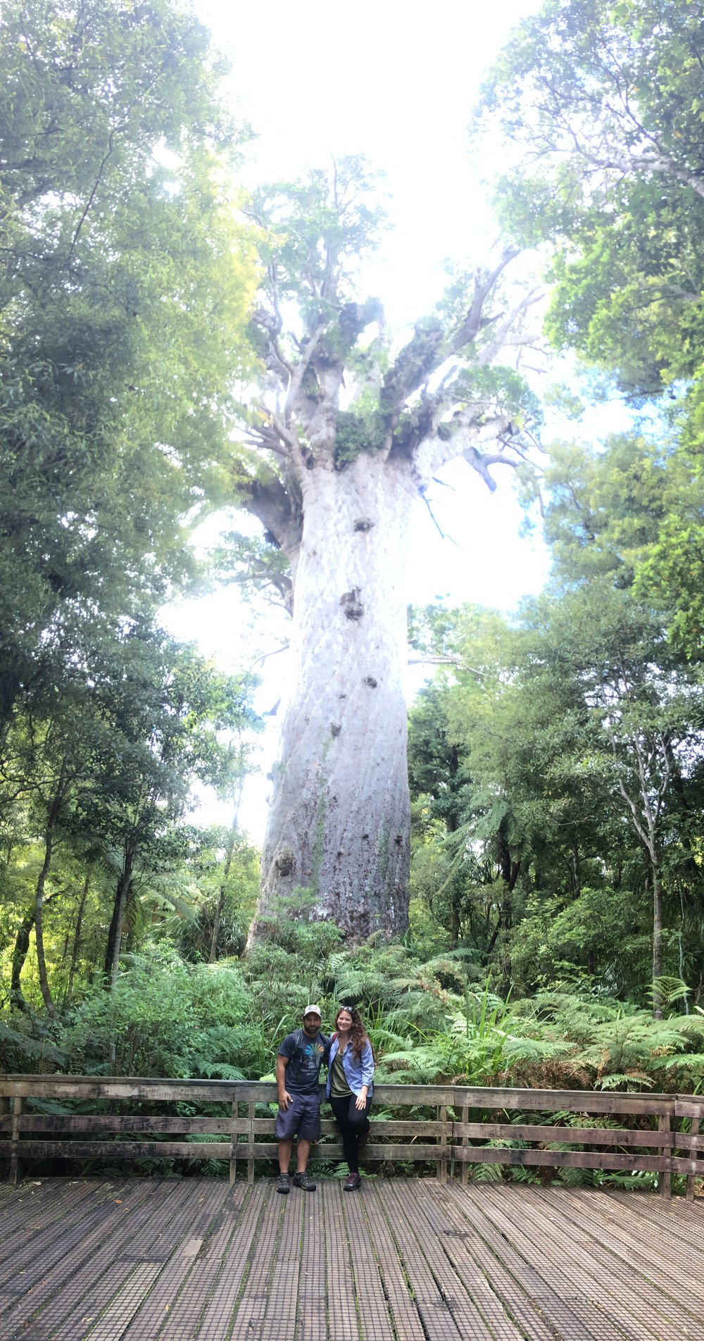 Visiting with Tane Mahuta (51 meters high, 13.8 meter trunk girth) - this is one of the oldest Kauri trees! They built a beautiful boardwalk to it and then discovered there was an even older one much less accessible.