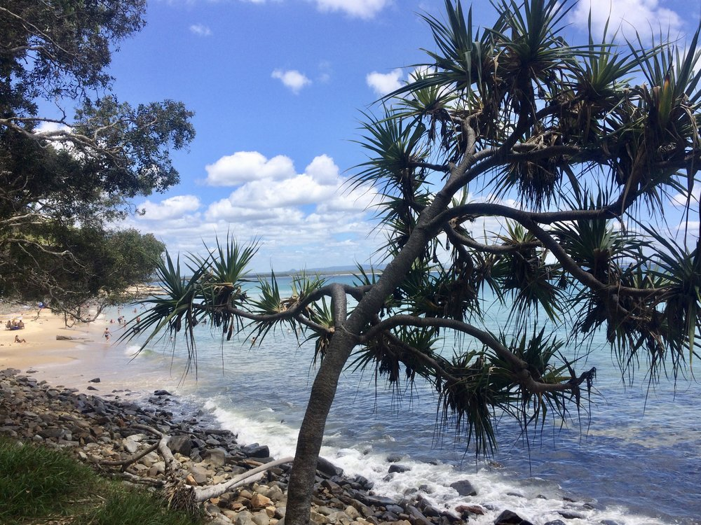 Wandering the National Park in Noosa.