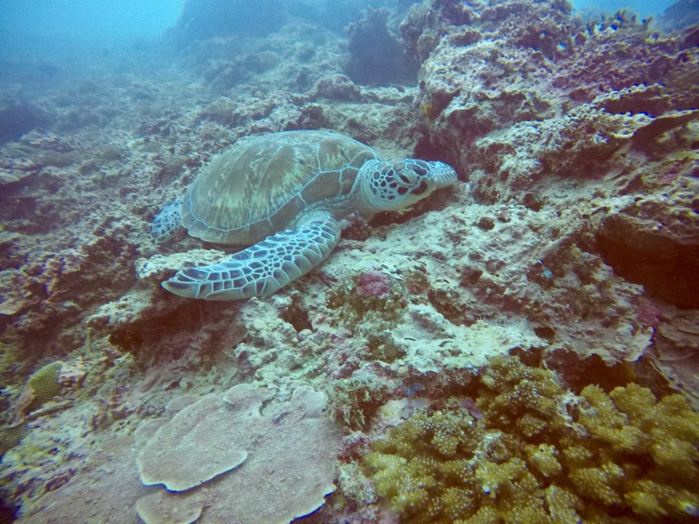 A dive with turtles is always the best dive!