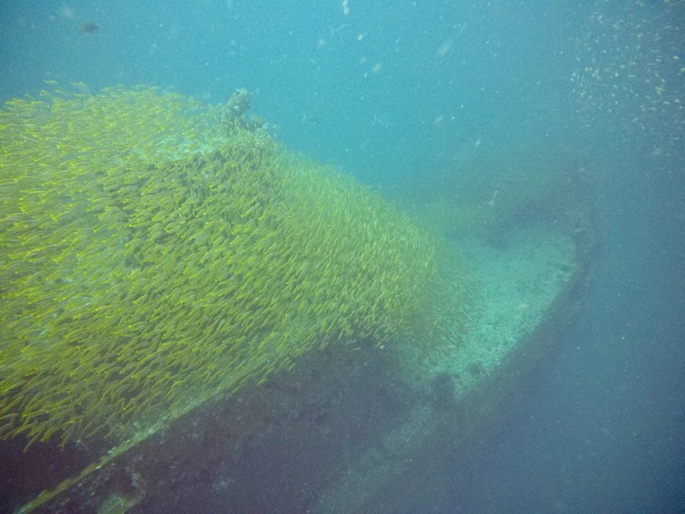 School of yellow snapper diving a local wreck off Koh Phi Phi.