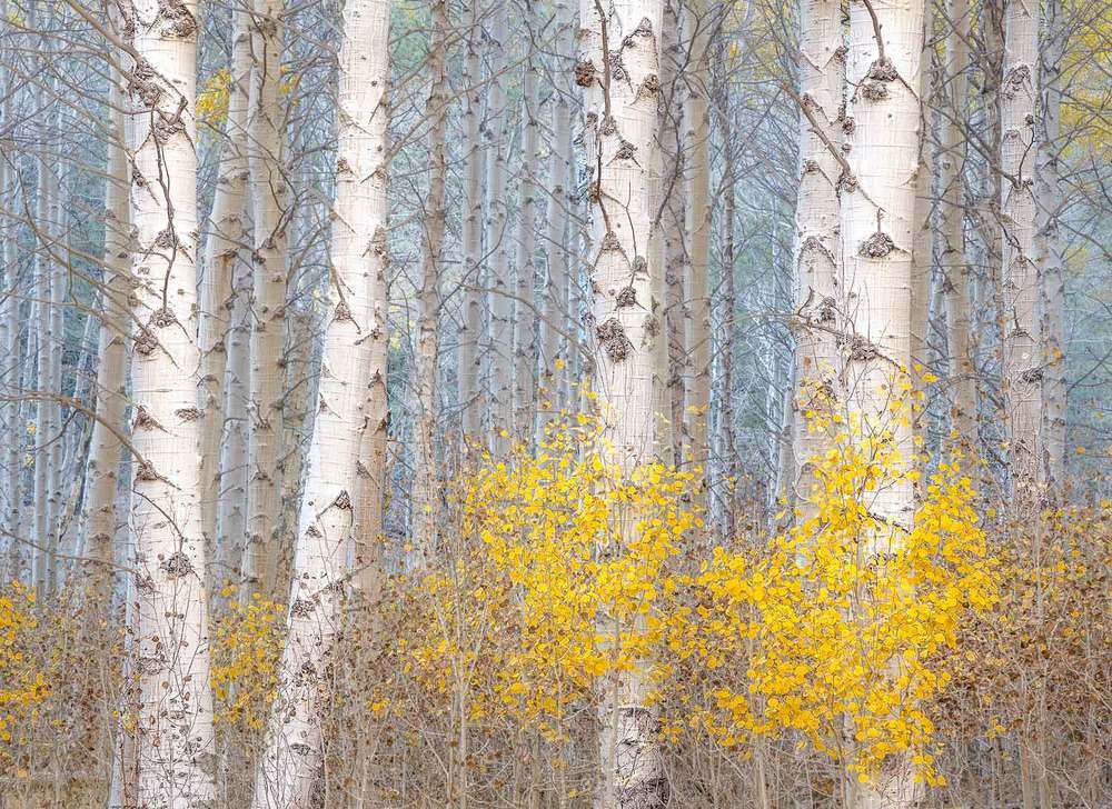 Gibb_aspens_and_blue_lightLR.jpg