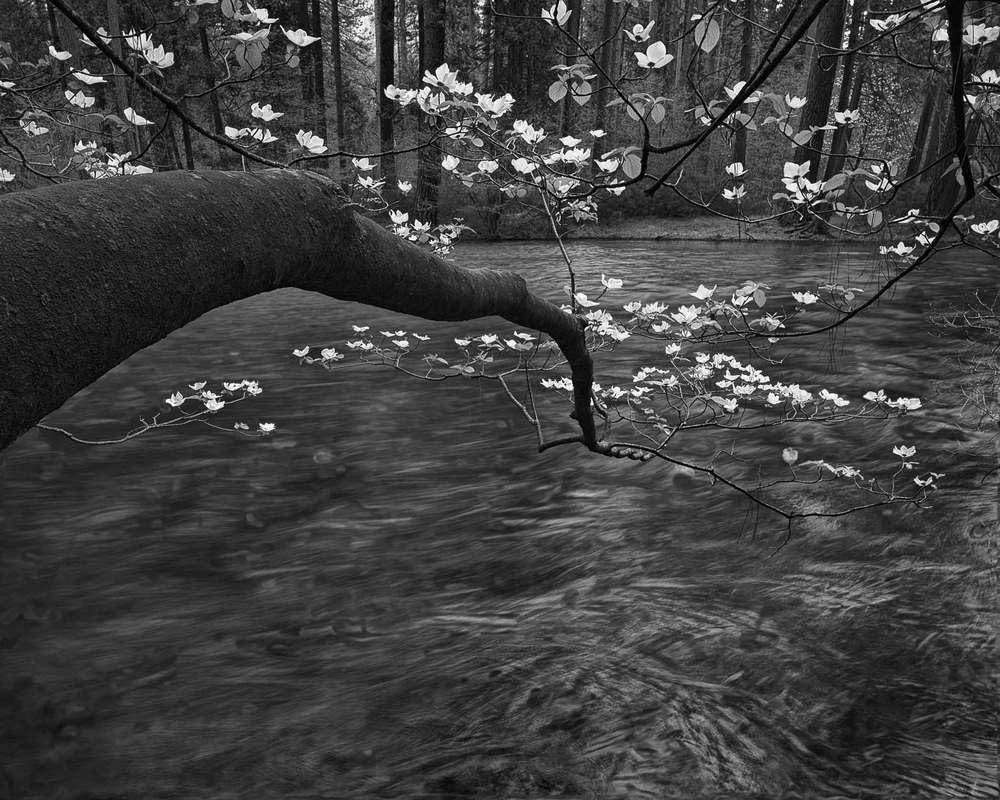 Hertz-dogwood-tenayaLR.jpg