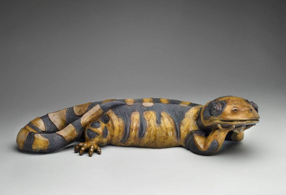 Park_california_tiger_salamanderLR.jpg