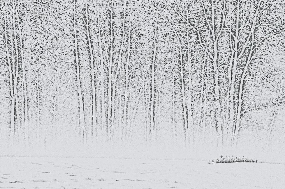 YR 26--Hansen, Peggy, Winter's Bones.jpg