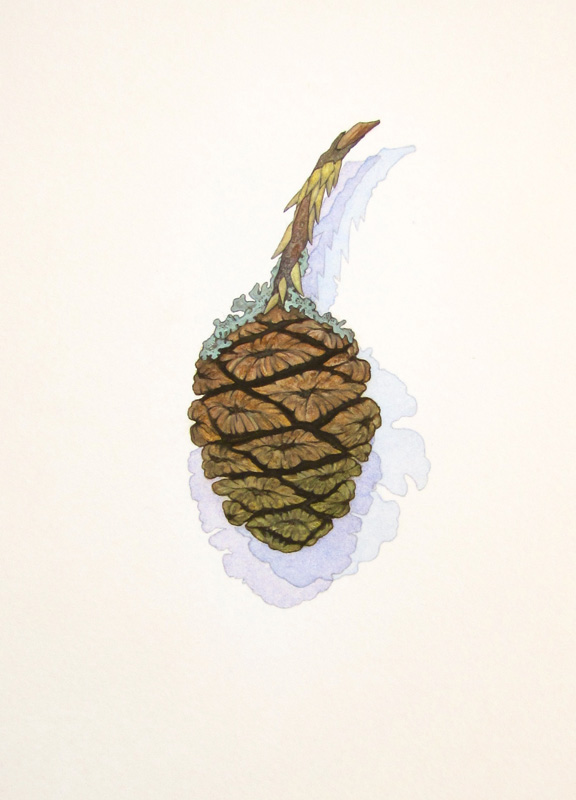 <i><b>Sequoia Cone with Lichens,</b></i> Sally Owens