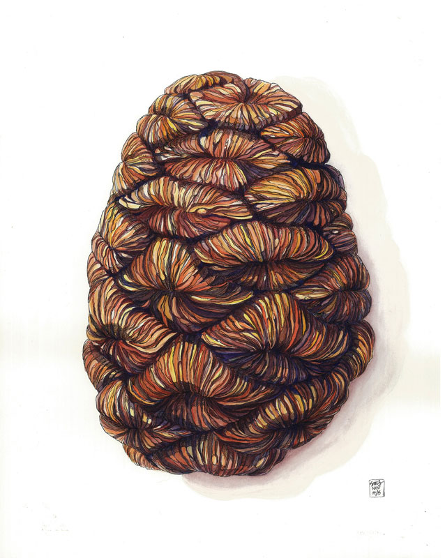 <b><i>Pinecone From A Giant Sequoia,</b></i> Samantha Zimmerman