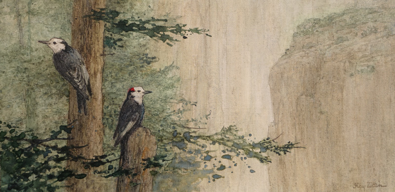 <b><i>White Headed Woodpeckers,</b></i> Floy Zittin