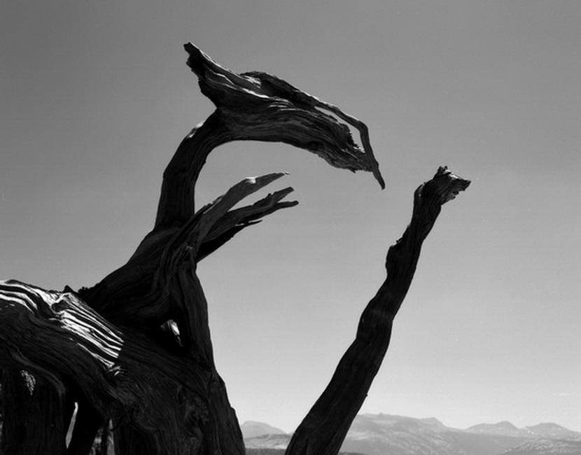 YR 24--Rippe, Brad, Tuolumne Rex, Yosemite.jpg