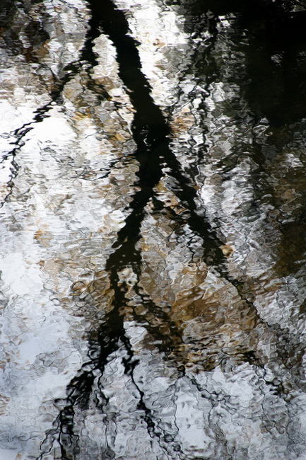 YR 23--Finkas, Ed, Merced River Reflections #1.jpg