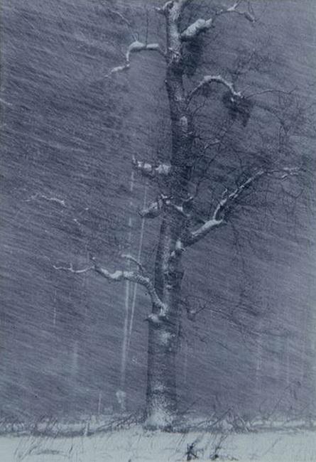 YR 17--Stokes, Cindy (Tree).jpg