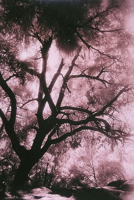 YR 16--Marsted, Marcia Reid.jpg
